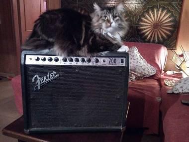 Fender 700 roc.pro